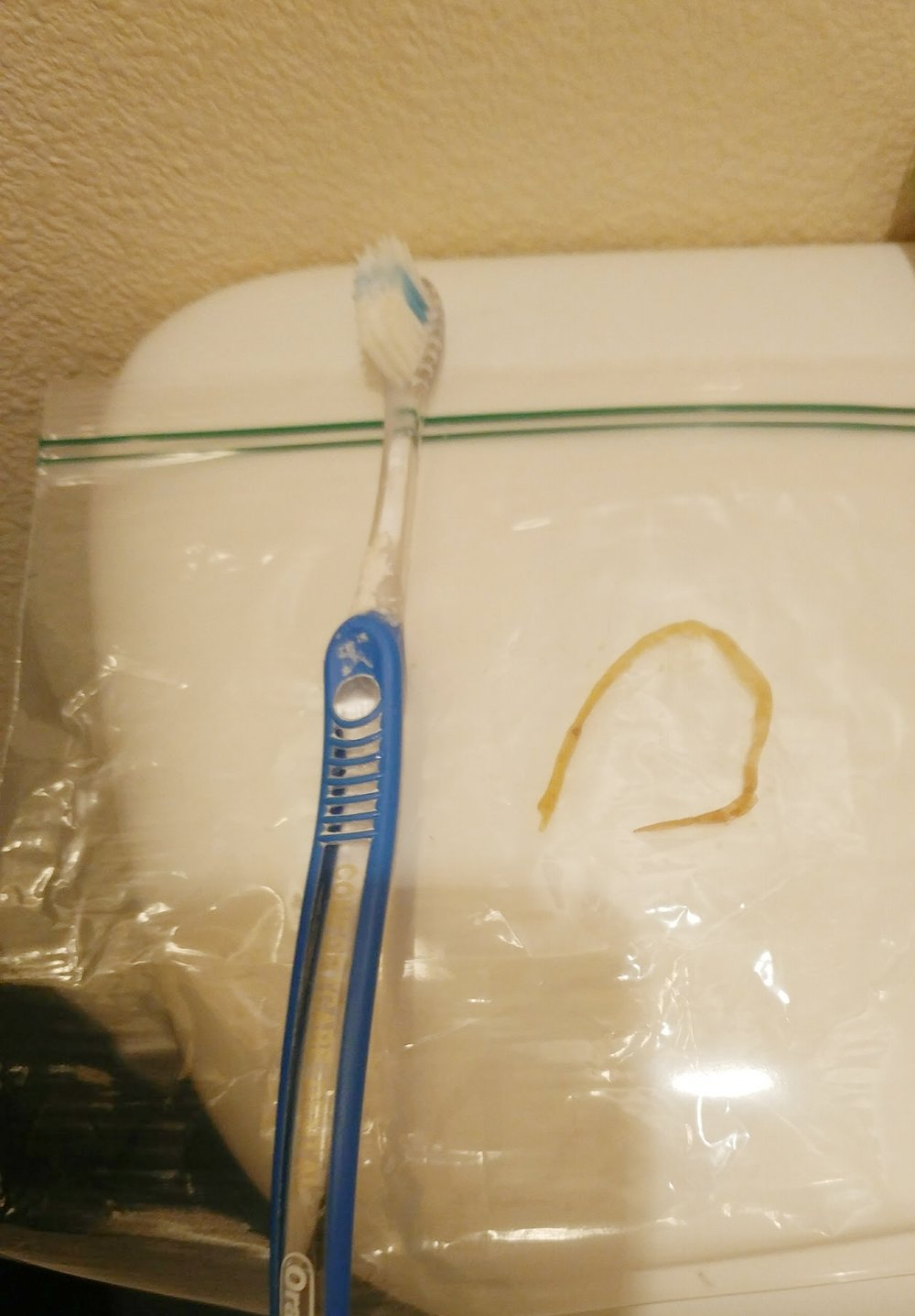 One of my parasites that came out in my stool.Trust me, I was really grossed out when I first saw this too. Toothbrush somehow makes this picture grosser.  I did not touch it to my toothbrush, just put it on top of bag for size comparison.