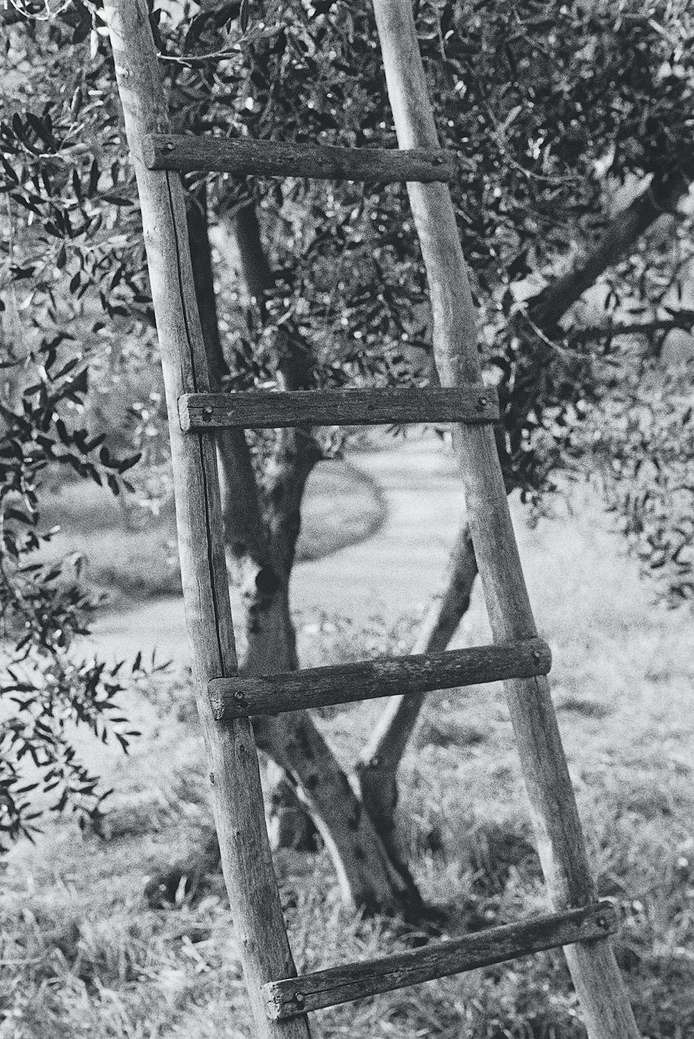 ladder_v2.jpg