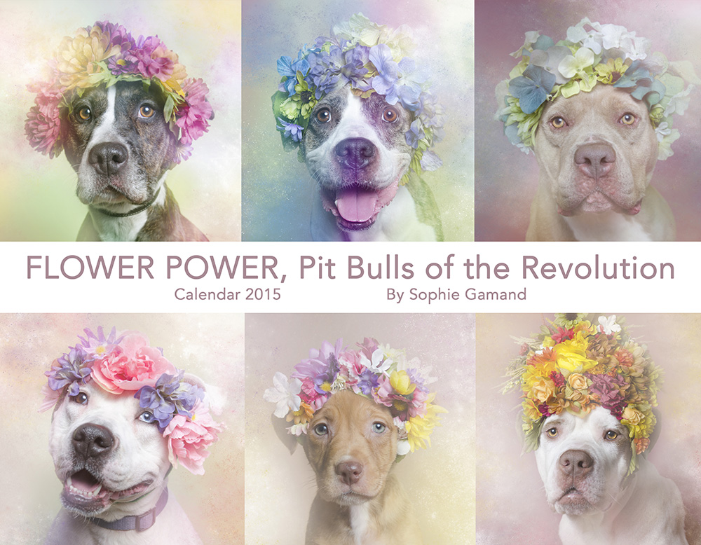 50% OFF - Flower Power 2015 Calendar