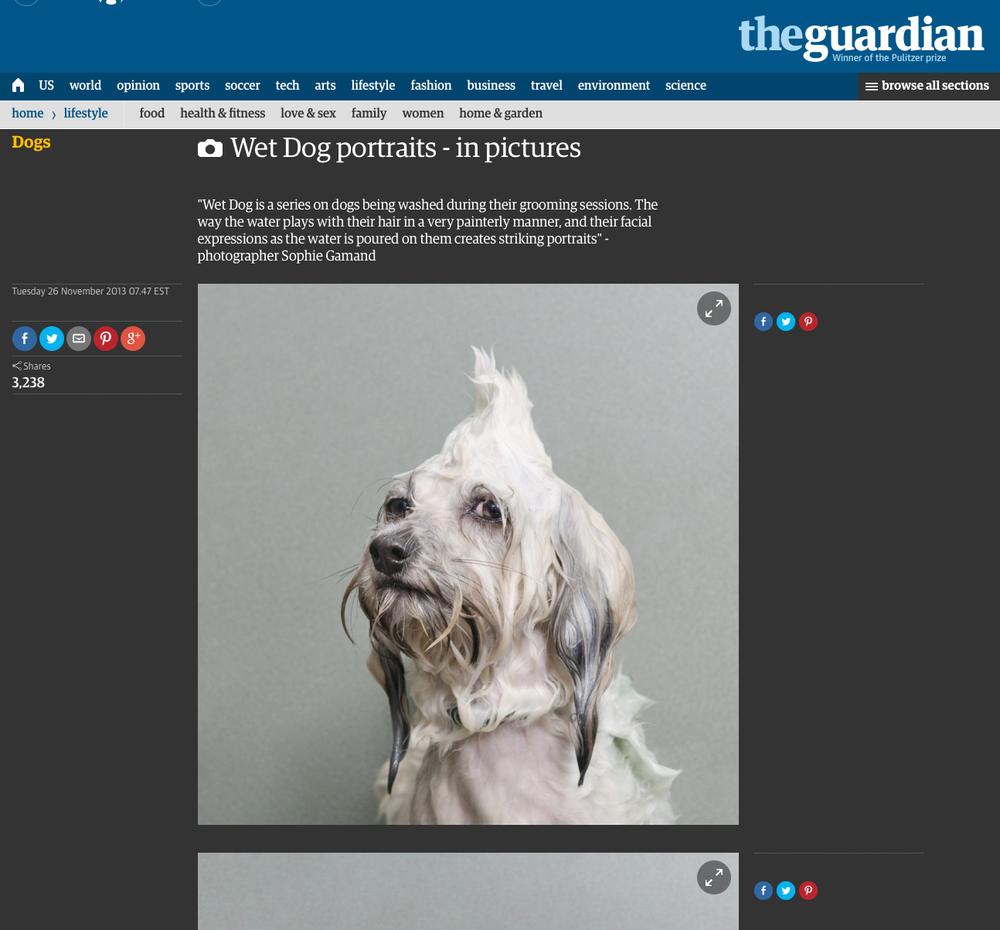 WD-guardian.jpg