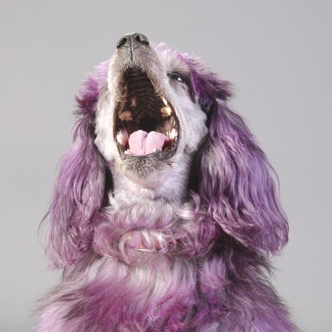 OPERA DOGS (2013-2018)