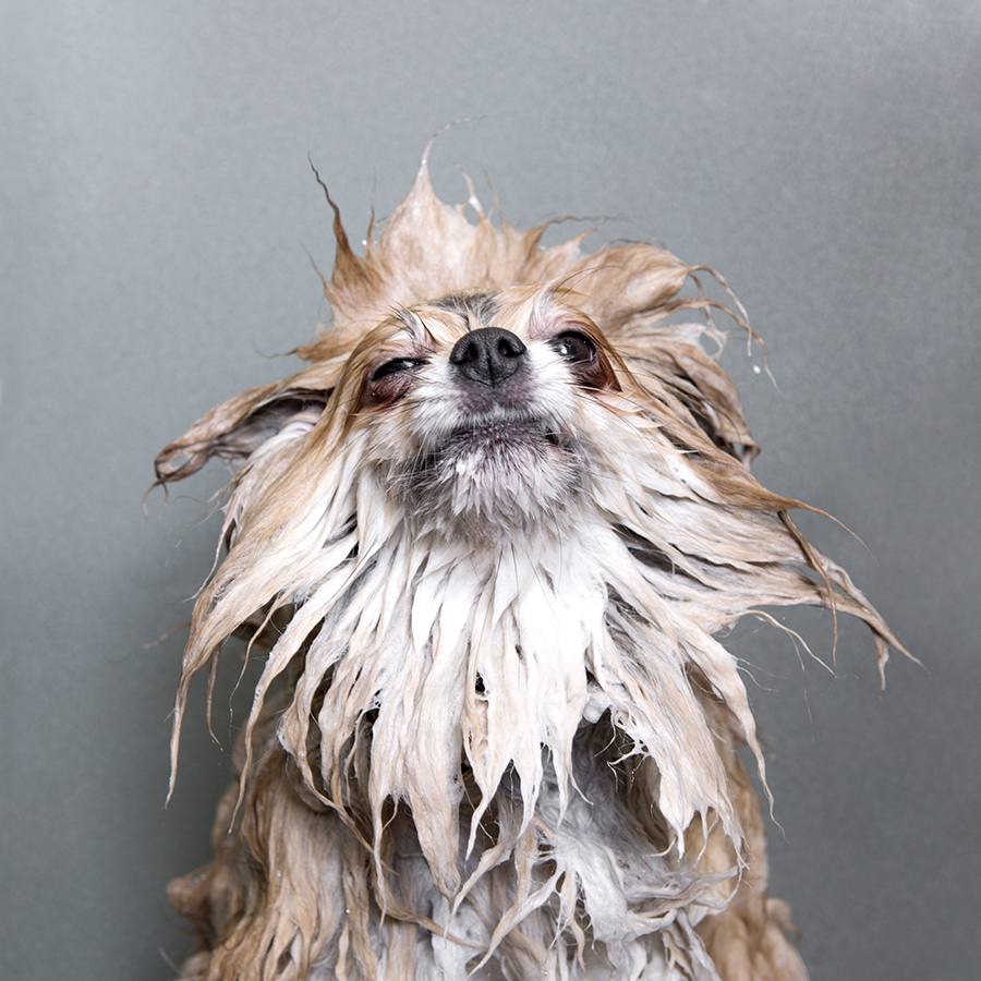 Wet Dog Sophie Gamand Photography