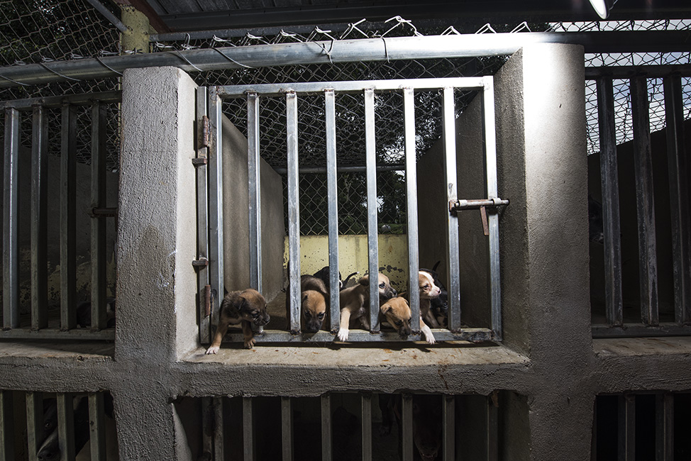 Puppies squeezing through the gate of their cage.