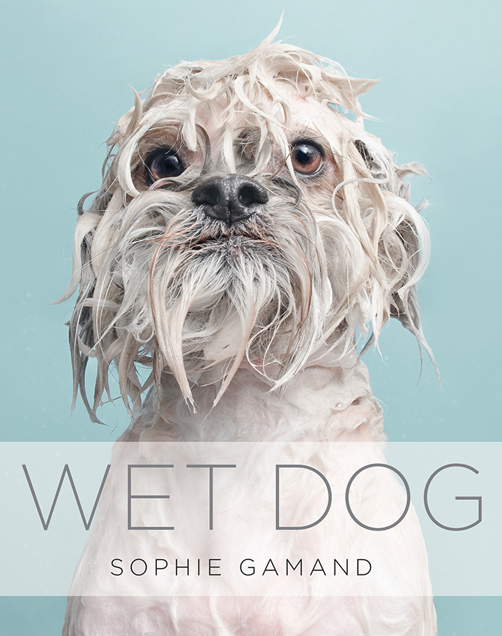 My Wet Dog book is still available! A compilation of miserable, soggy doggies.  Get it on Amazon here .