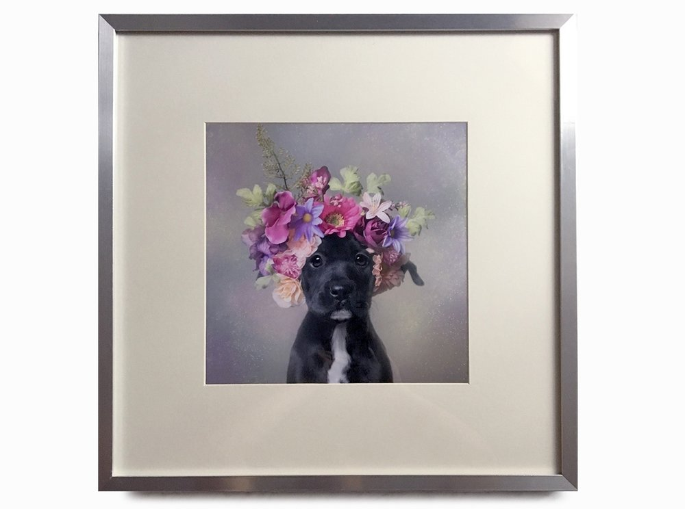 """PRINTS: OPEN EDITIONS Sizes up to 12x12"""". U.S. orders: Visit my online print store for tons of options including Flower Power prints, and Wet Dog prints. Contact me if you don't find what you want! International orders: contact me for any international orders."""