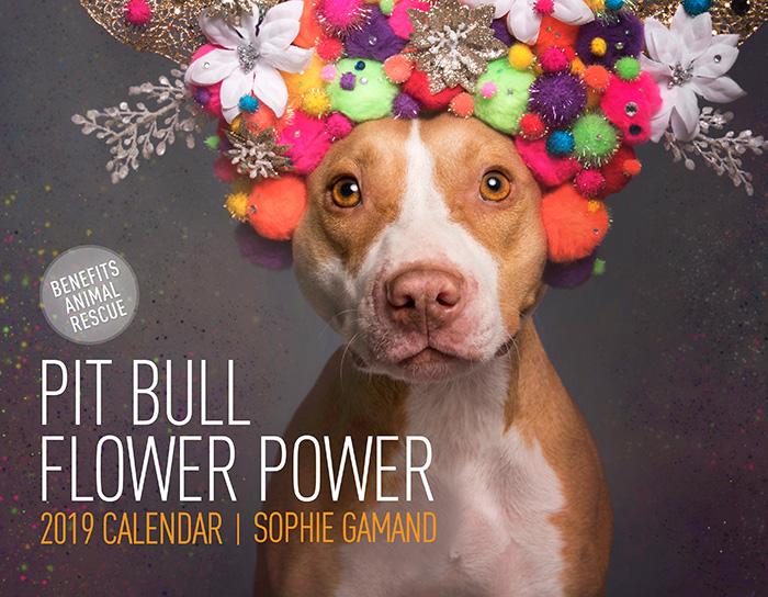Pit Bull Flower Power2019 calendar / ADULTS - Ships worldwide.