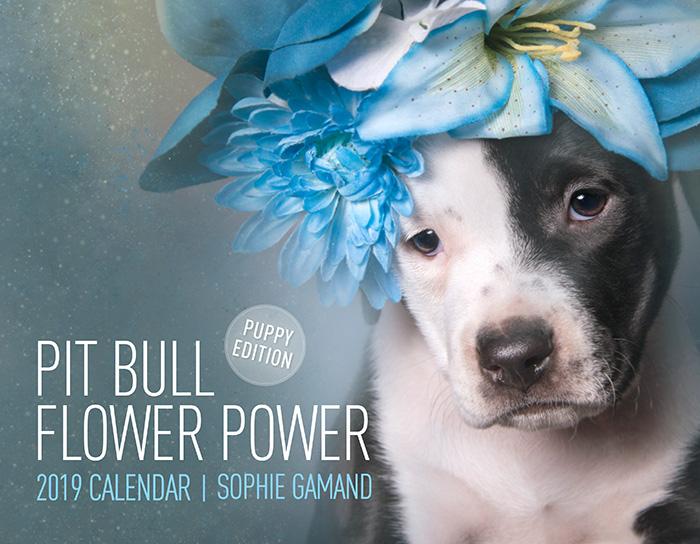 Pit Bull Flower Power2019 calendar / PUPPIES - Ships worldwide.