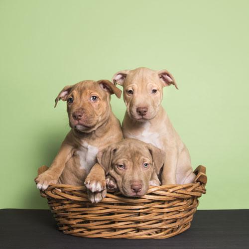 Puppies-Columbia03.jpg