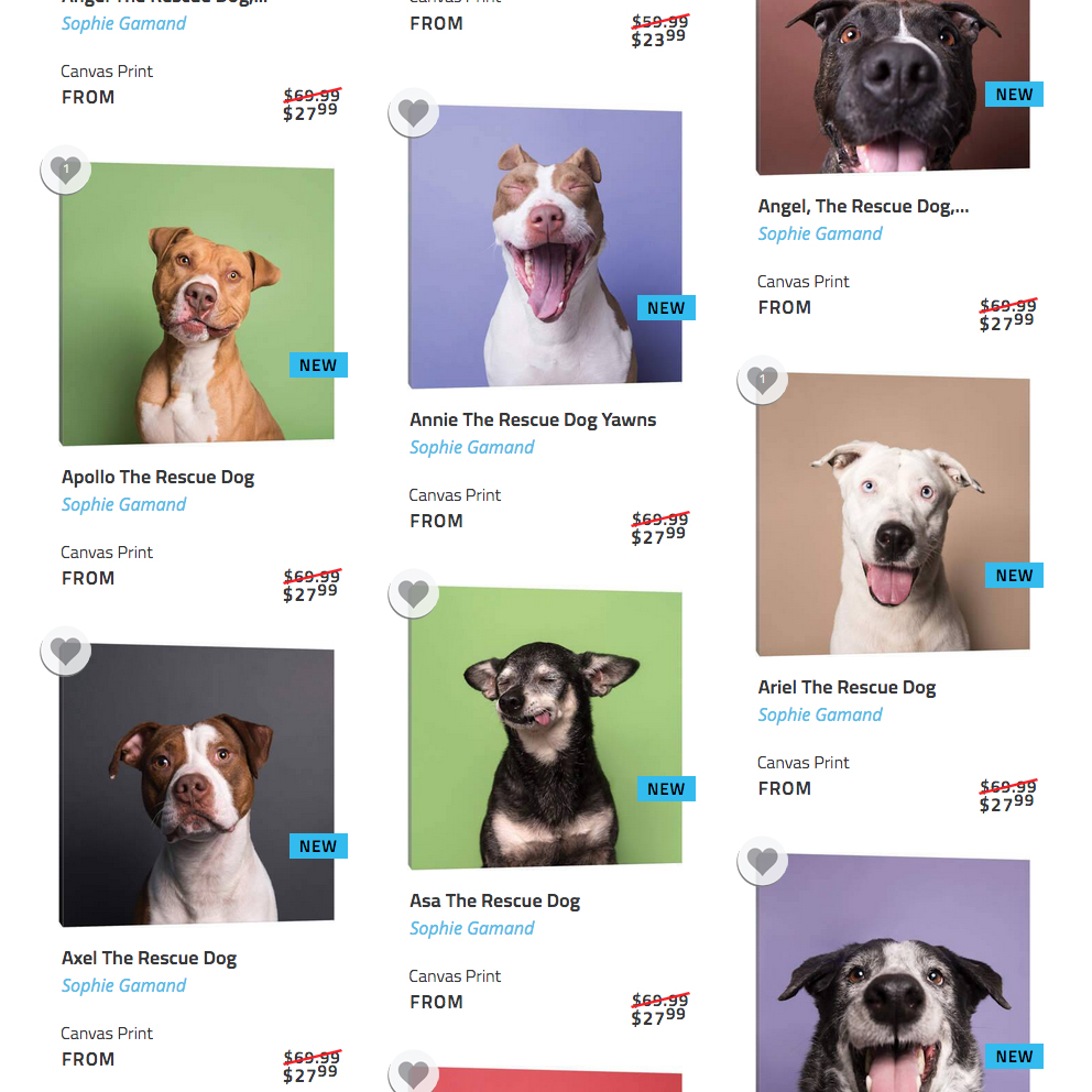 iCanvas COLLECTION.  Framed prints/canvas prints. Various sizes. Ideal for pet professionals (shelters, groomers, daycare, veterinarians).
