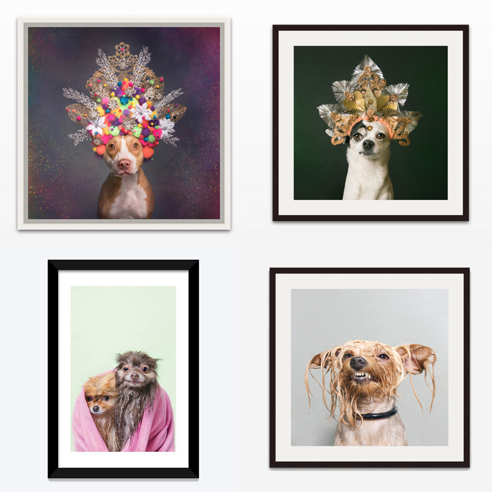 Wall art - From small, affordable options to brighten any wall, to large/limited editions for art collectors, I offer a wide range of prints and I am always happy to assist you with the process!