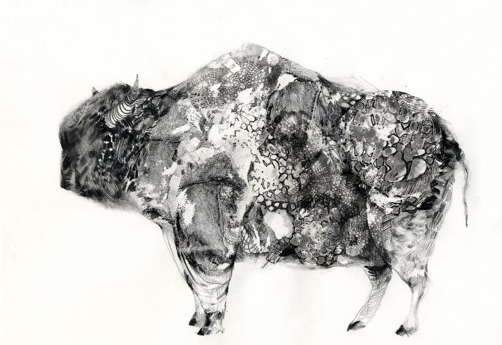 buffalo_01001.jpg