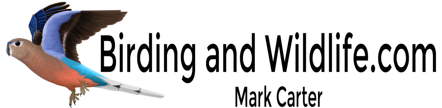 Mark Carter Birding and Wildlife