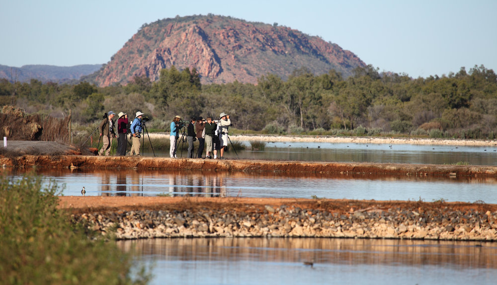2018 Bird Guide Training Courses - Unique 4 day course based in Alice Springs