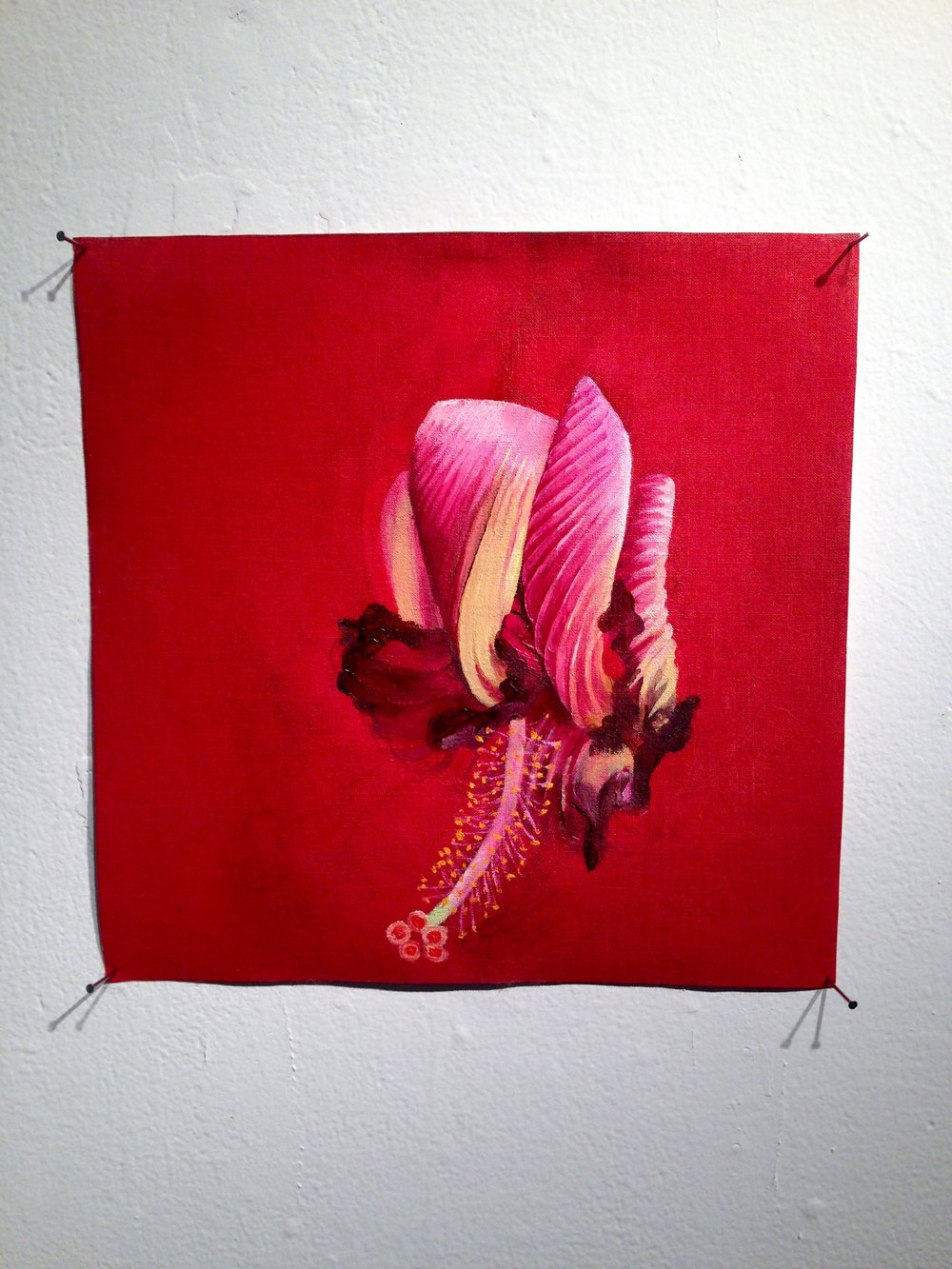 Katherine Rutecki,  Spent Hibiscus no. 2,  oil on linen, 30x30cm, 2015