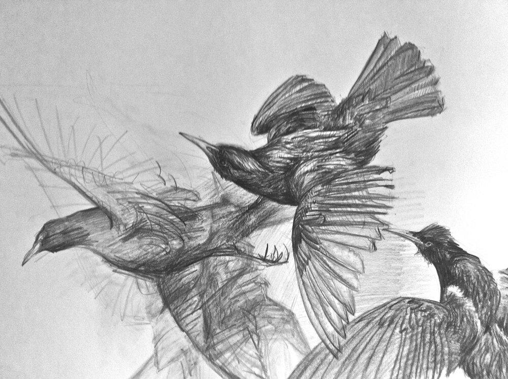 Katherine Rutecki,  Bird Study,  graphite on paper, 58x80cm, 2012