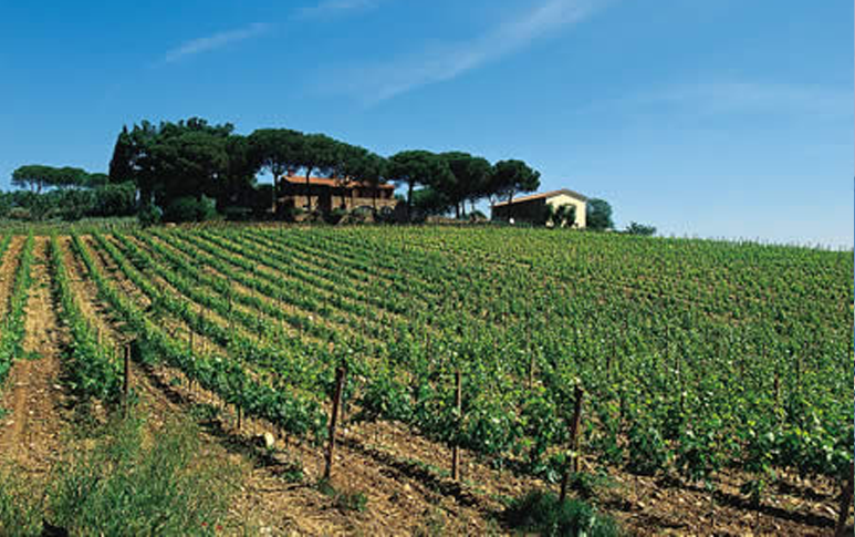 View of one of the Magliano vineyards.