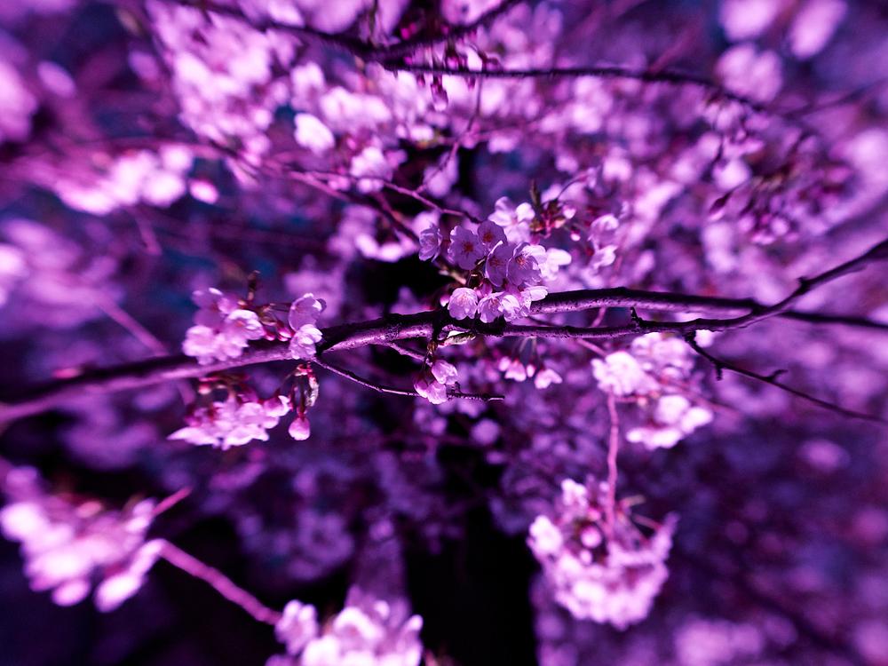 Wooooow, pretty purple light.