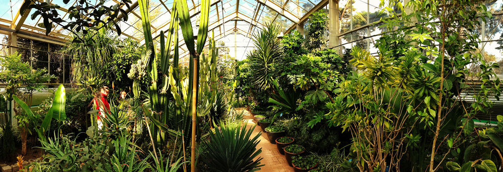 Inside the botanical garden