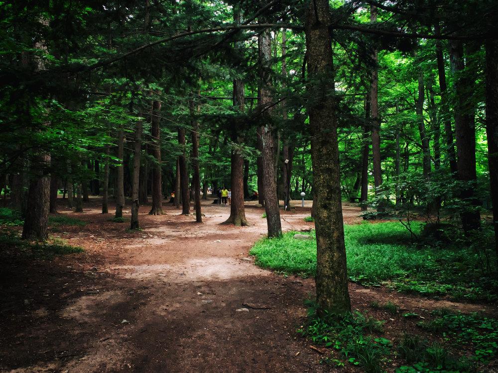 Path to Beopjusa.