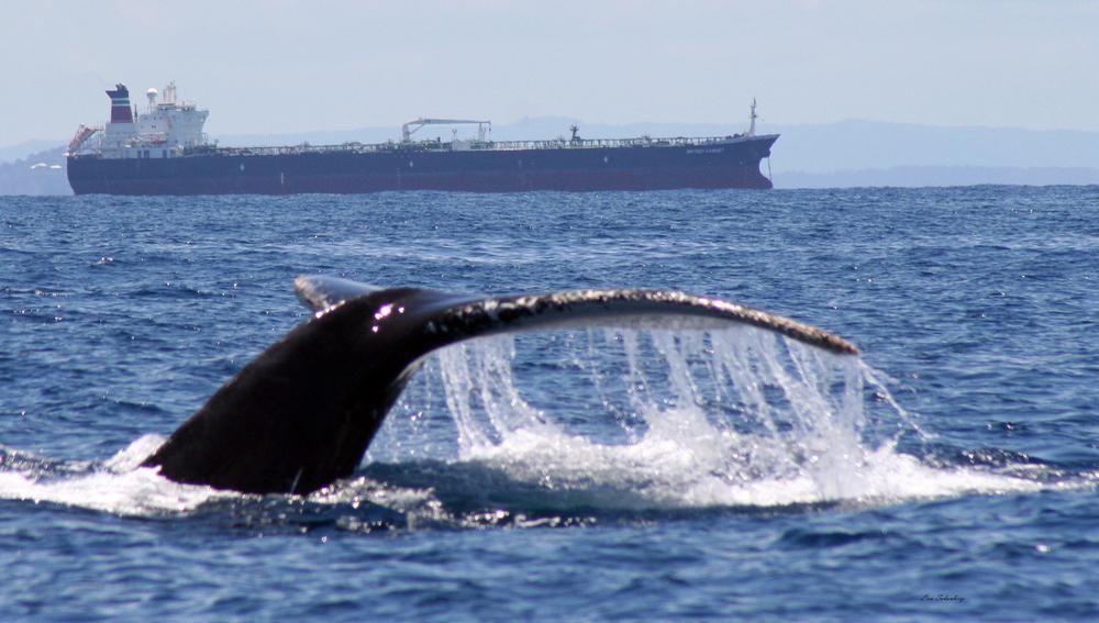 tanker_humpback-1.jpg