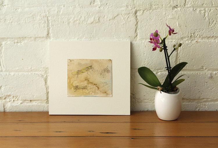 Grass+hopper+study-Elsa+Santos-ArtPharmacy-view2 (1).jpg