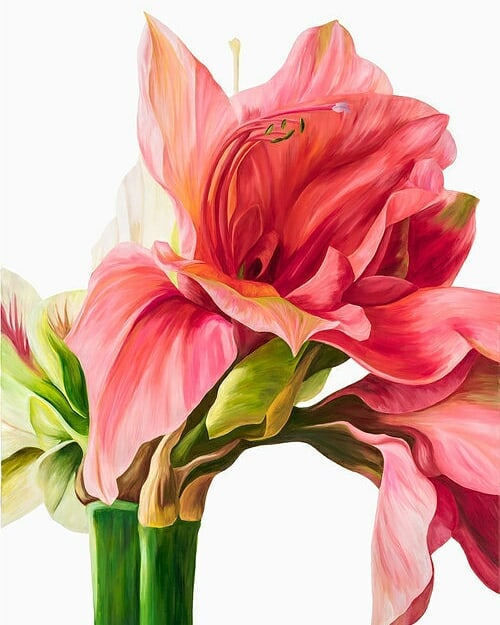 Busy week? Stop and scroll through these stunning pink flowers for some calming stress relief. Paintings by Freya Powell's (@freyapowellstudio).
