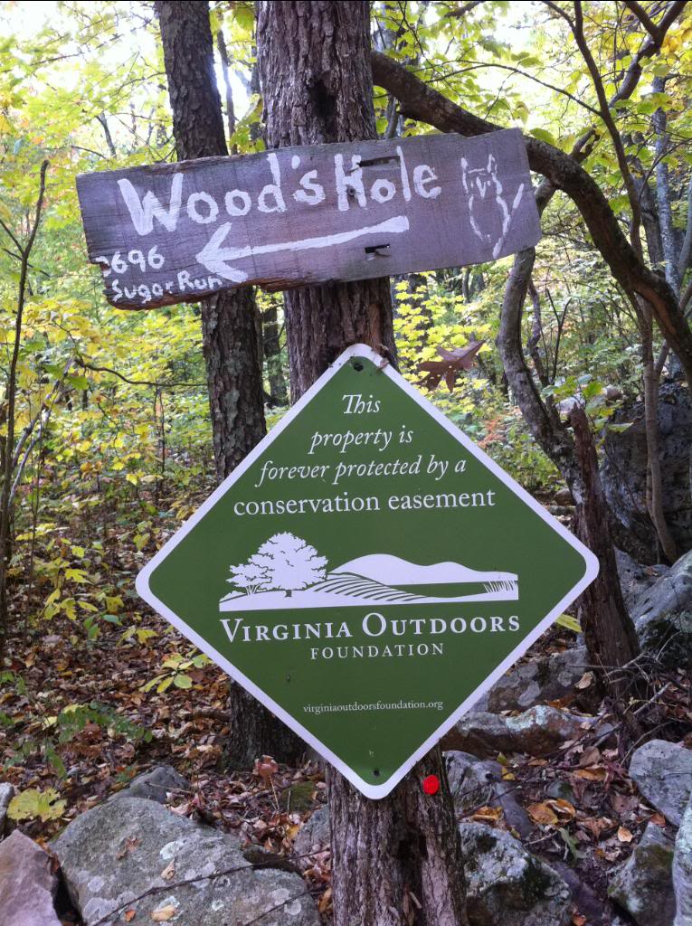 Wood's Hole.jpg