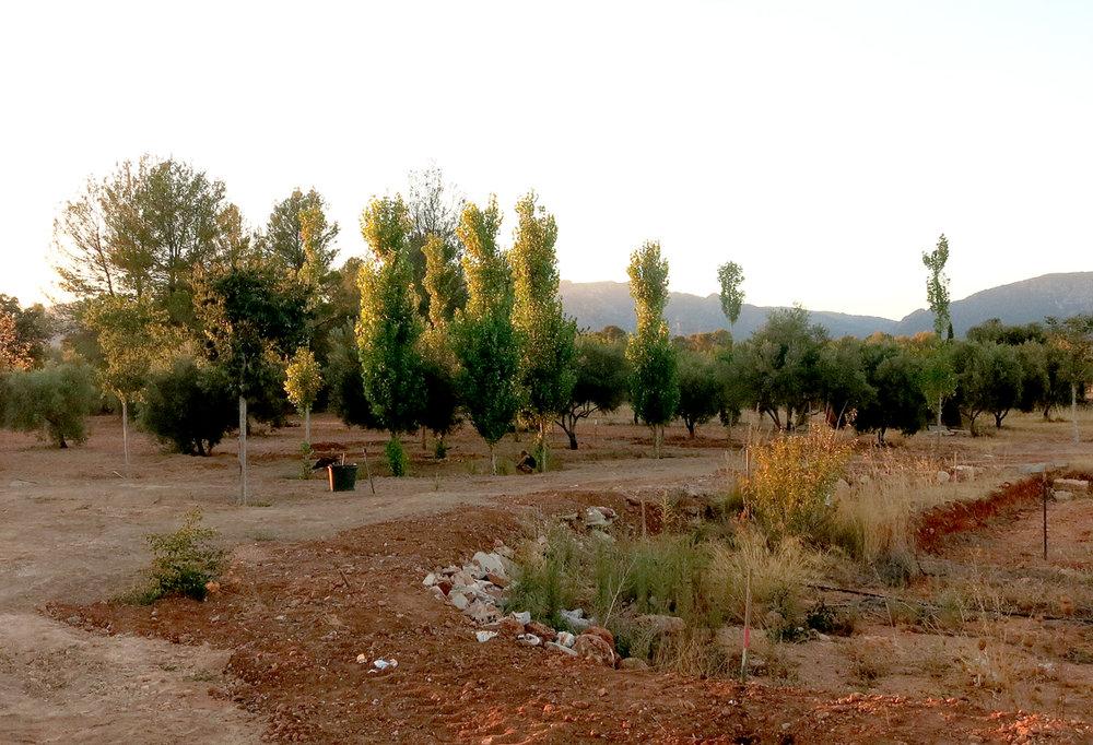 1_Casa-Tanca-Carritx-Bovedas.jpg