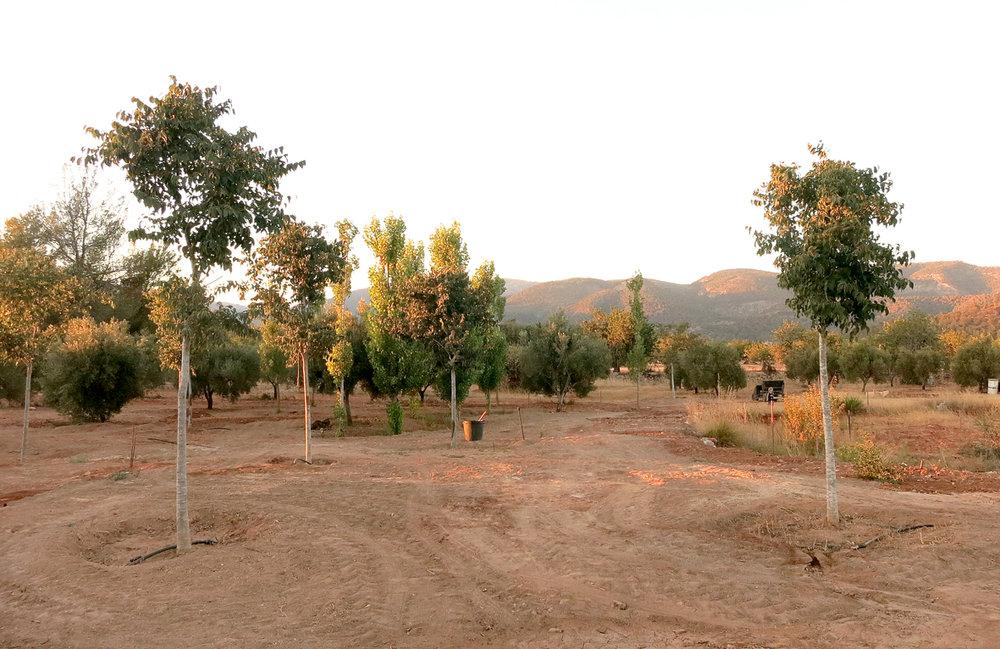 3_Casa-Tanca-Carritx-Olivos.jpg