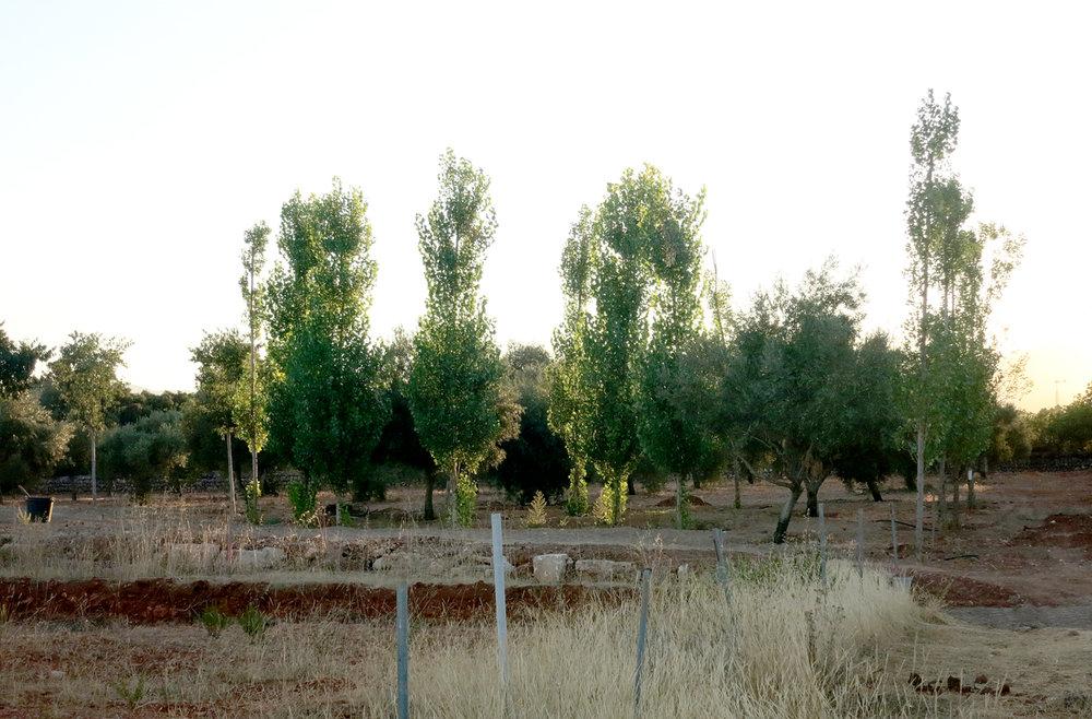 4_Casa-Tanca-Carritx-Paisajismo.jpg