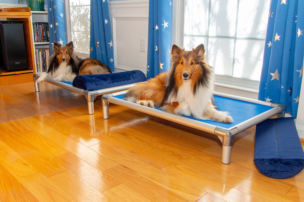 Zelda & Link, my studio Shelties and resident fluff nuggets.