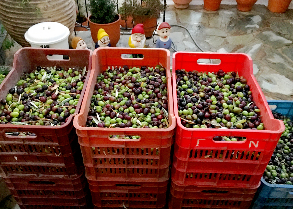 Best part about Greece? The infinite amount of olives and olive oil