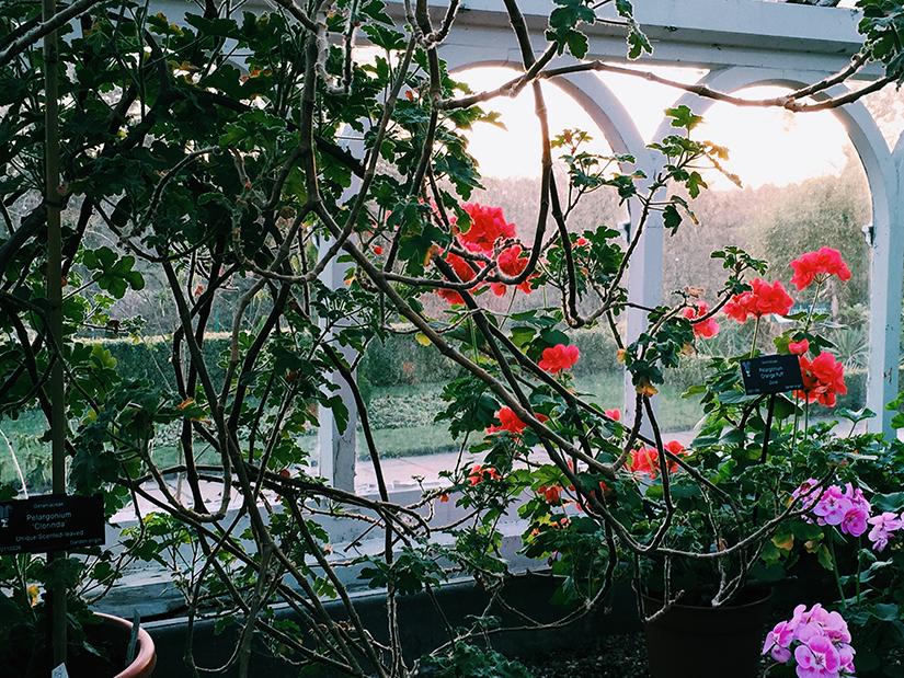 AESME Blog | birmingham botanic gardens