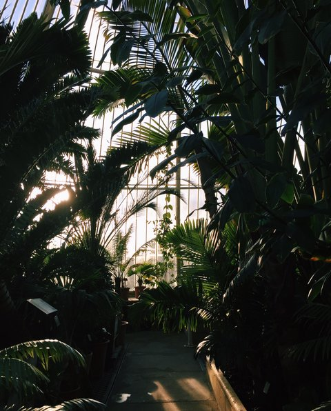 AESME Blog | kew gardens