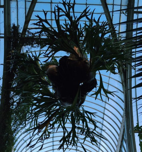 AESME Blog | kew glasshouse