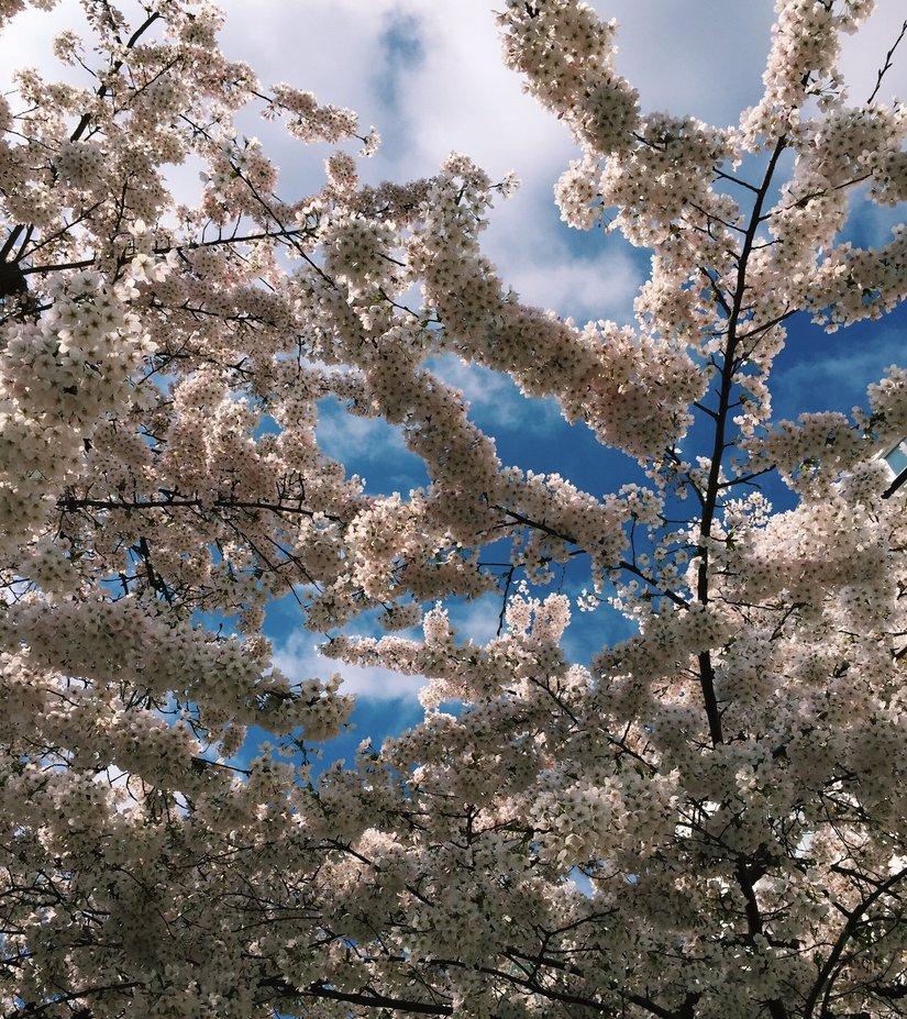 AESME Blog | spring blossom