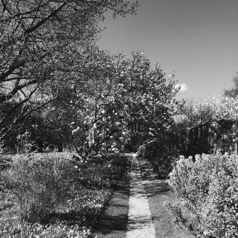 AESME Blog | the garden path