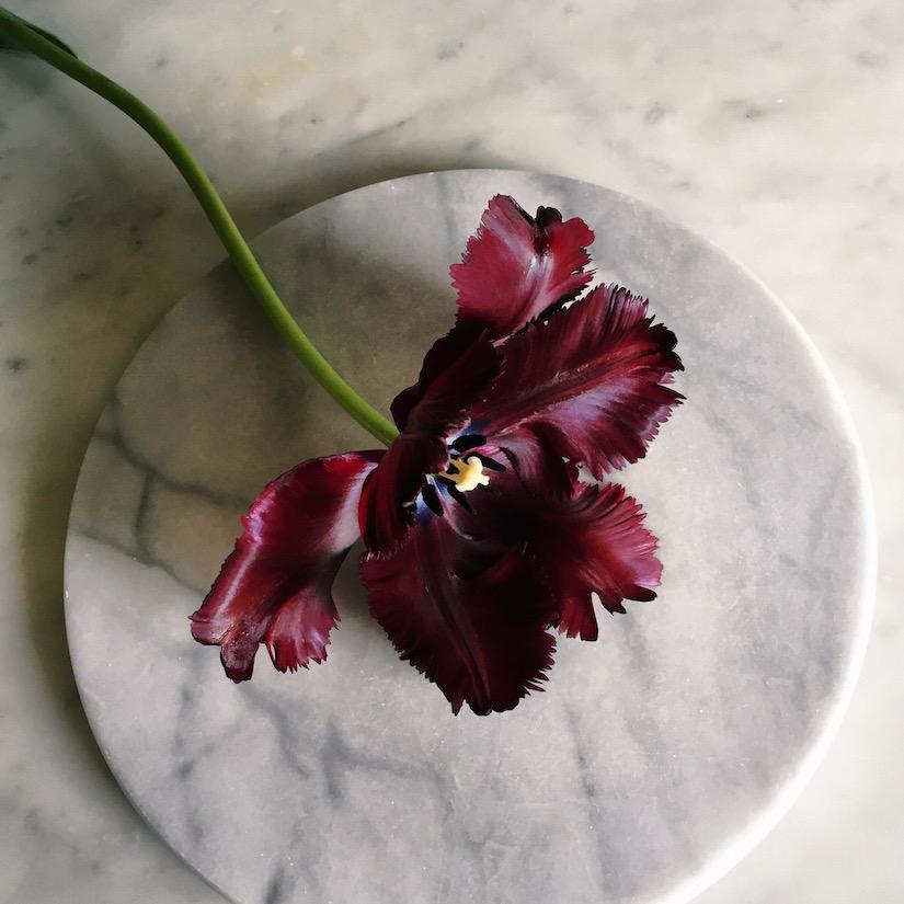 AESME Blog | tulip