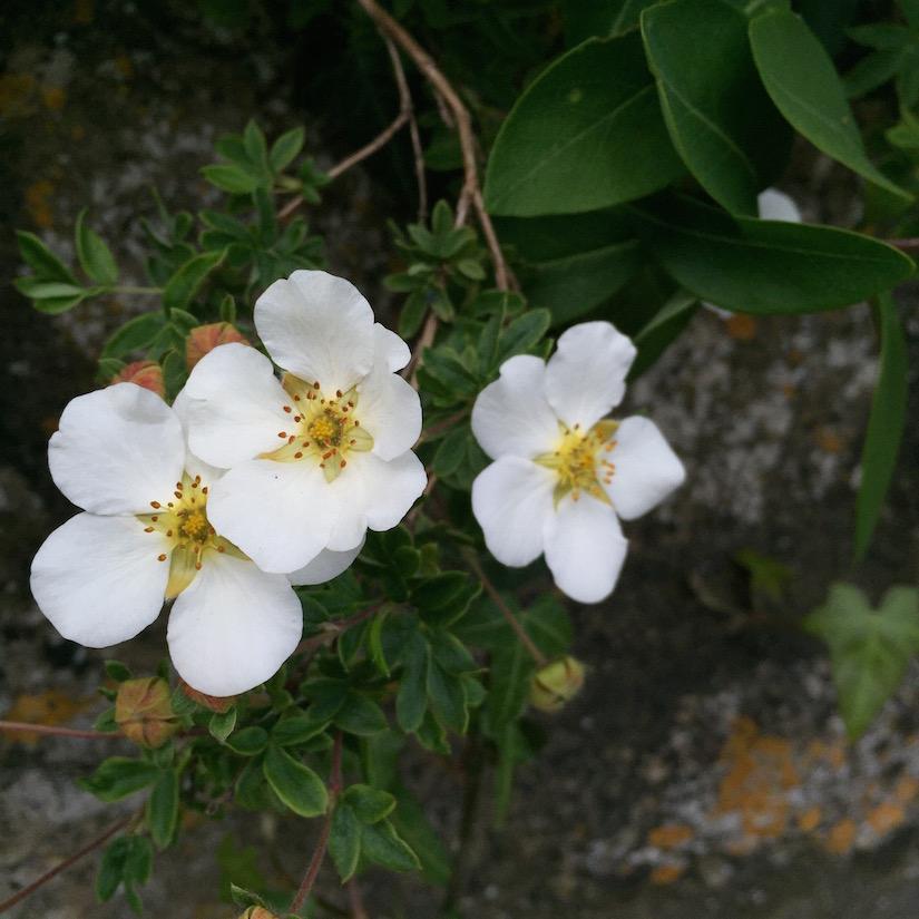 AESME blog | summer in the garden
