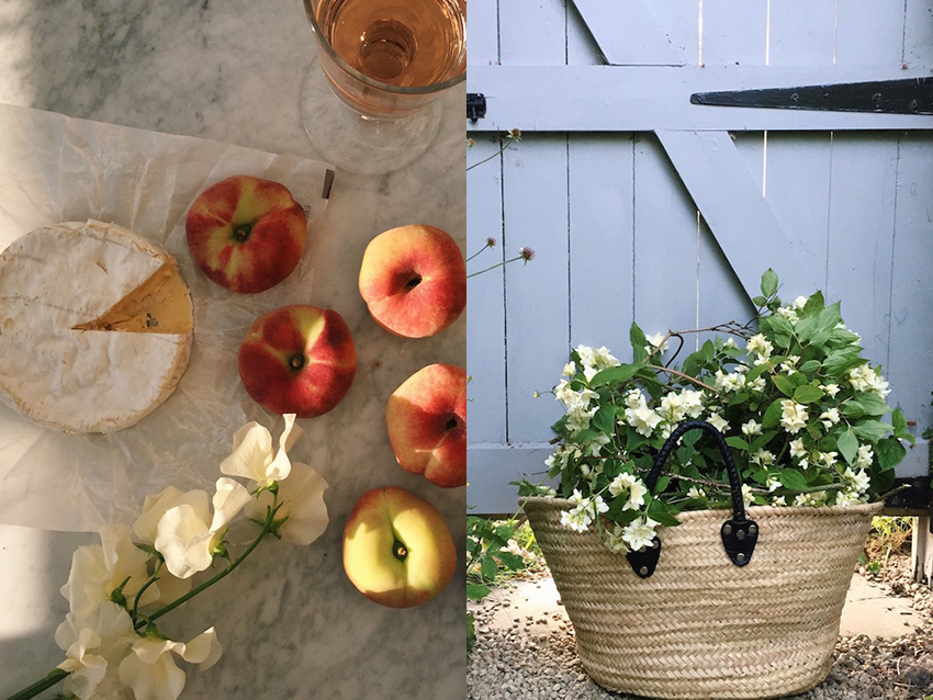 AESME blog | summer foraging