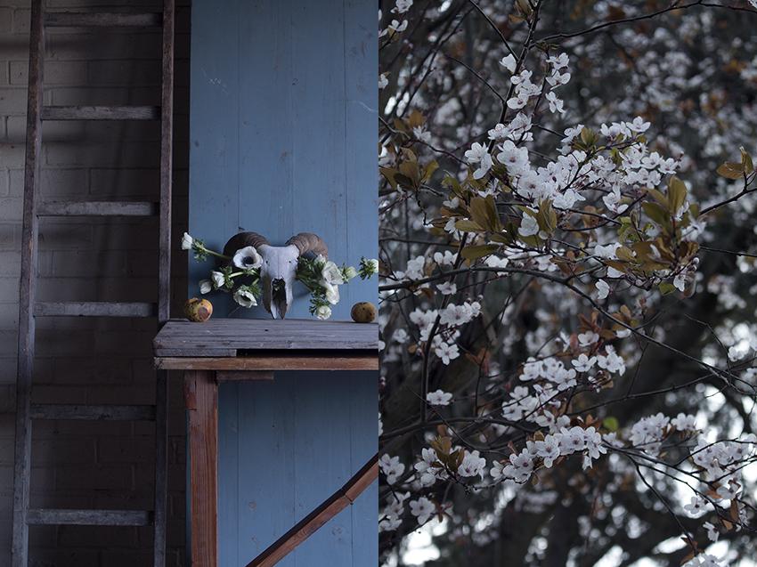 AESME blog | spring flowers.jpg