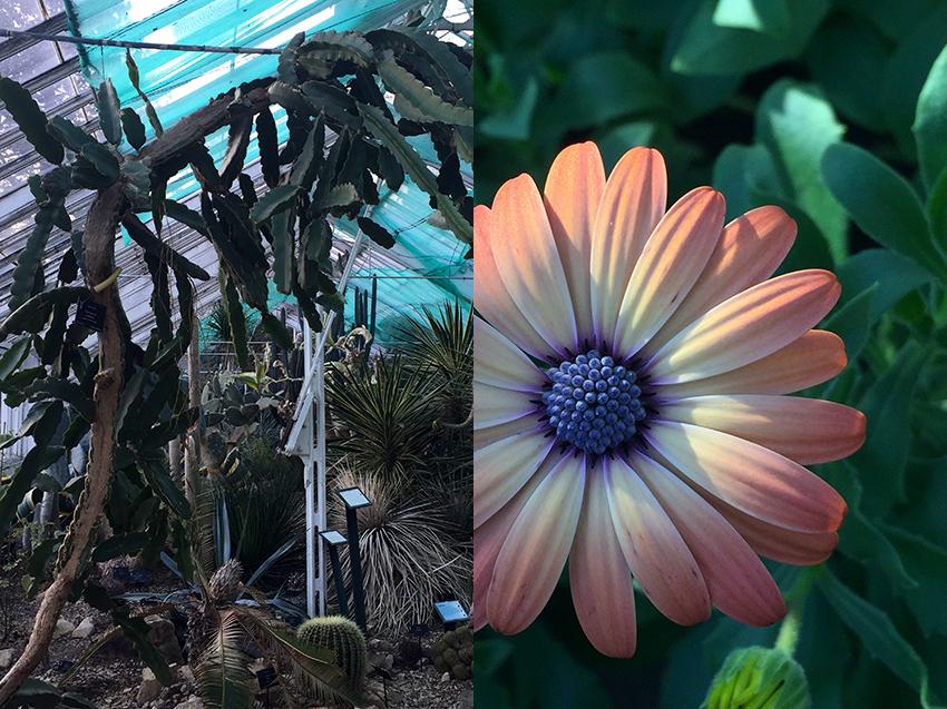 AESME blog | Birmingham Cacti Glasshouse.jpg