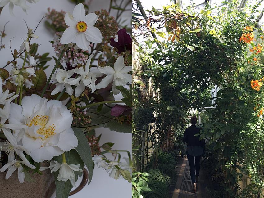 AESME blog | Oxford Botanic Gardens.jpg