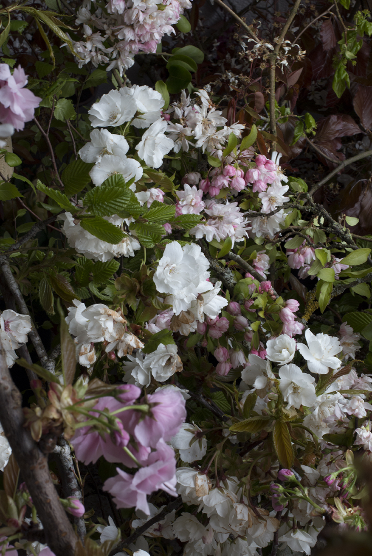 AESME blog | spring blossom.jpg