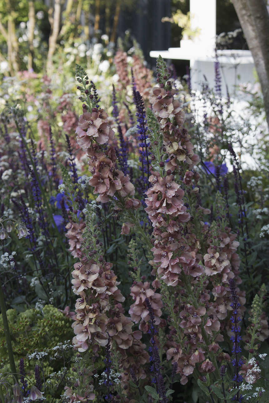 RHS Chelsea Flower Show | image credit AESME