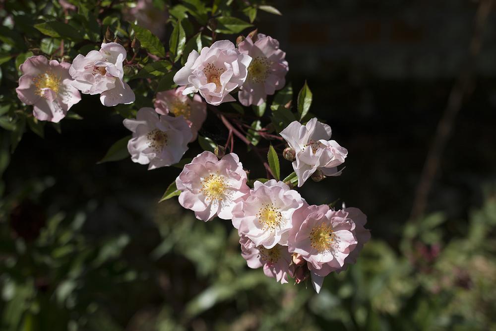 Helmingham Hall Gardens | Aesme Flowers  Helmingham Hall Gardens | Aesme Flowers