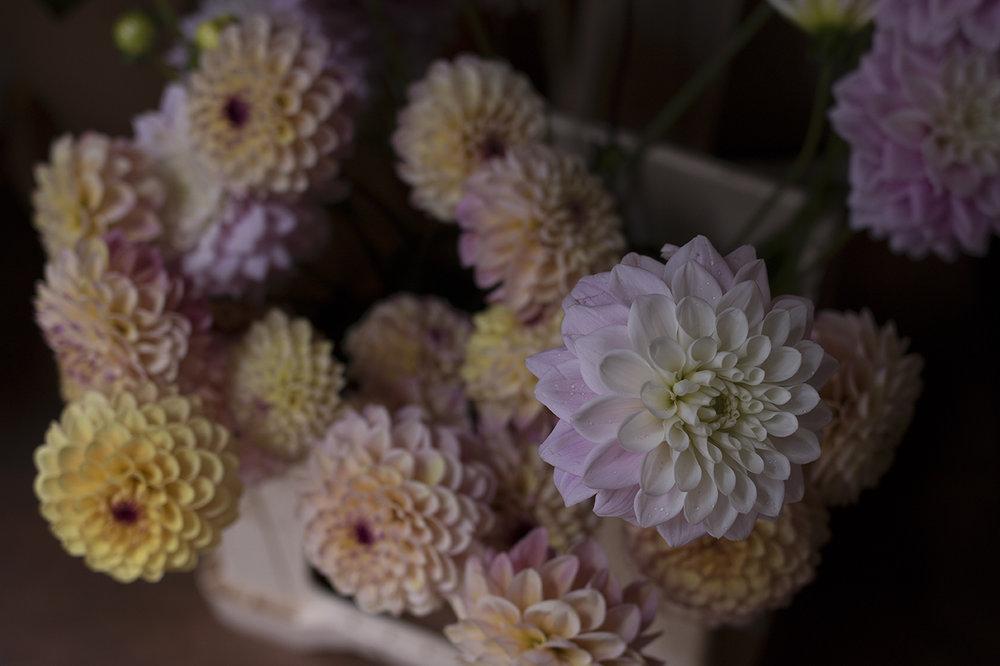 Dahlias | Aesme Flowers.jpg