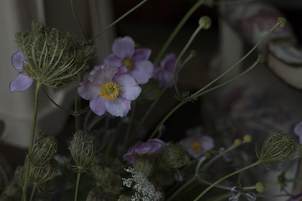 Japanese anemone | Aesme Flowers.jpg