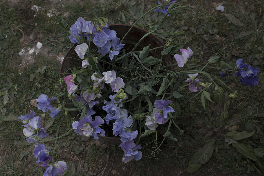 Sweet pea bucket | Aesme Flowers.jpg
