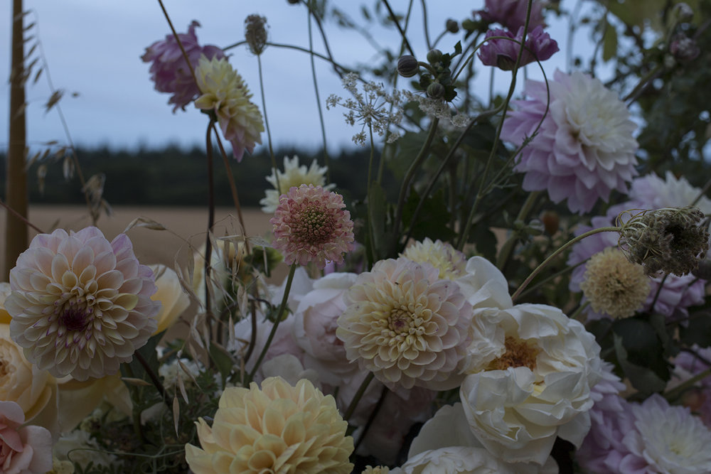 Scabious | Aesme Flowers